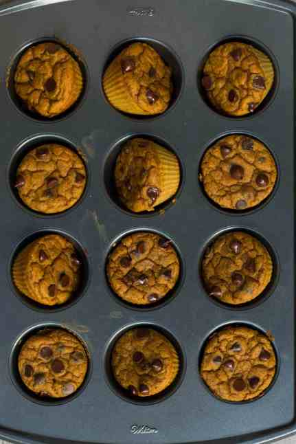 Pumpkin-Chocolate-Chip-Protein-Muffins-5